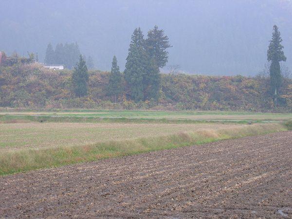 今日もまた魚沼産コシヒカリの田んぼは雨降り