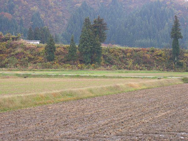 本格的な冬はもうすぐ@魚沼産コシヒカリの田んぼ