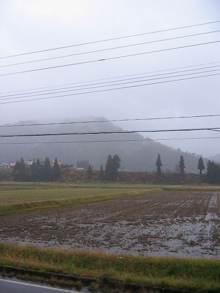 今日は雨ですが、さほど寒くないです
