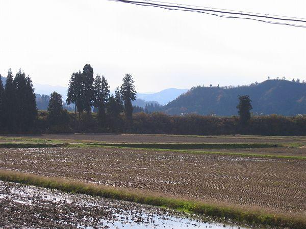 魚沼産コシヒカリの田んぼはいい天気で日射しがあたたかく感じます