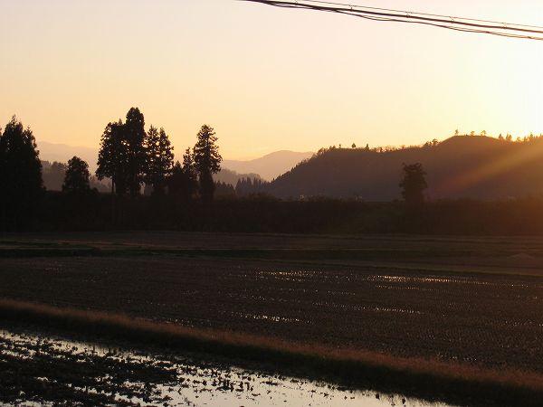 魚沼産コシヒカリの田んぼはよく晴れていい天気でした