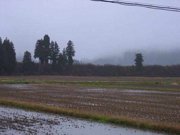 今日も冷たい雨が降っています
