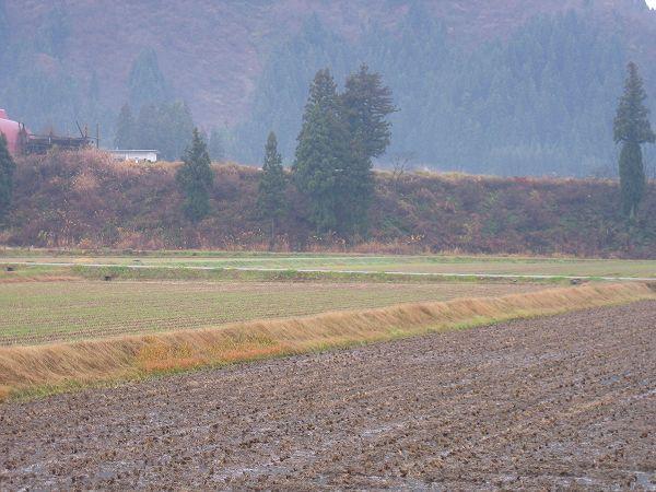 魚沼産コシヒカリの田んぼは冷え込んでいます