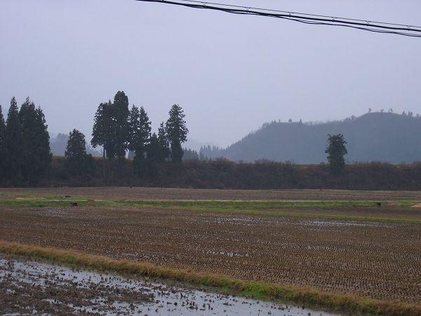 午後になって天気がくずれてきました