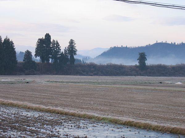 今朝の魚沼産コシヒカリの田んぼは冷え込みが厳しいです