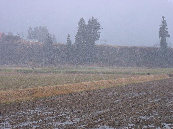 風雪が強く荒れた天気になってきました