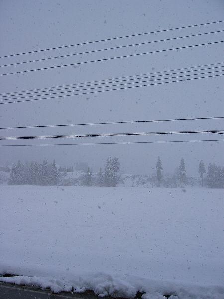 今日もまた本格的に雪が降っています