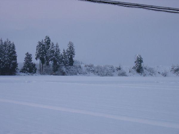 魚沼産コシヒカリの田んぼは冷え込みが厳しいです