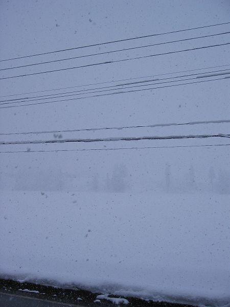 魚沼産コシヒカリの田んぼでは雪が強く降っています