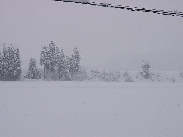 魚沼産コシヒカリの田んぼは大雪