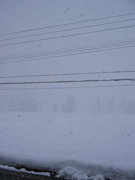 今日も魚沼産コシヒカリの田んぼは大雪です