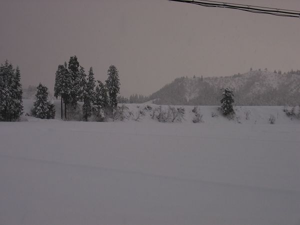 魚沼産コシヒカリの田んぼにまたたくさんの雪が降りました