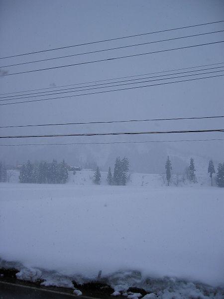 夕方近くになってまた雪が降り始めました@魚沼産コシヒカリの田んぼ