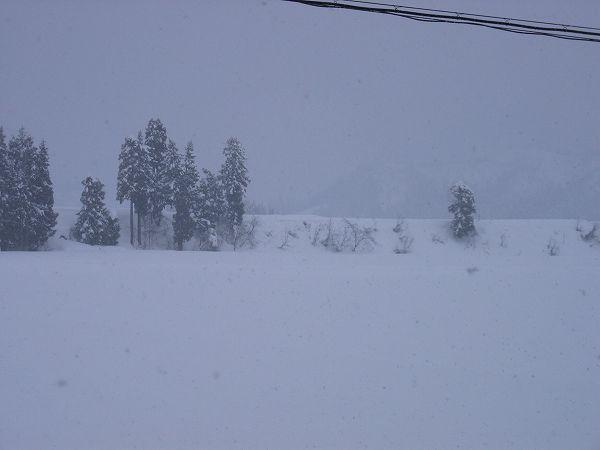 魚沼産コシヒカリの田んぼに弱い雪が降っています