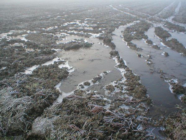 田んぼの水は表面が凍っています