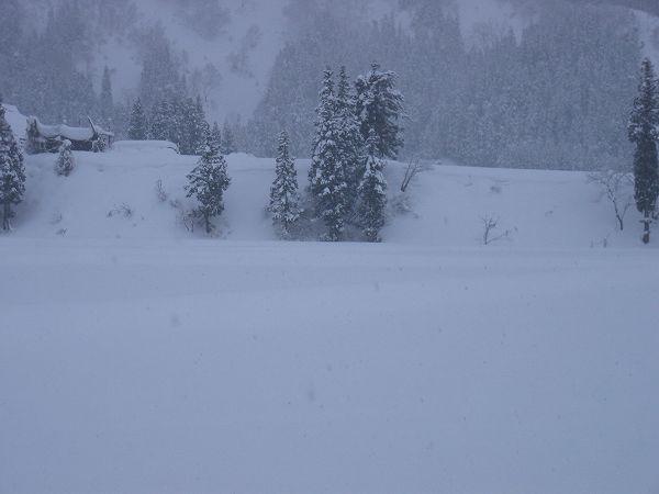 魚沼産コシヒカリの田んぼにはちらほらと雪が舞っています