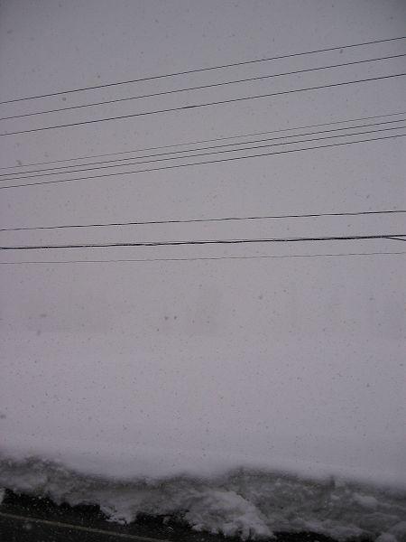 魚沼産コシヒカリの田んぼでは激しく雪が降り出しました