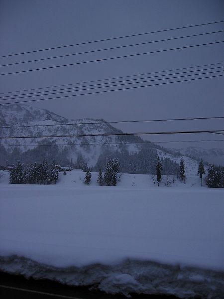 今日の魚沼産コシヒカリの田んぼは雪があまり降りませんでした