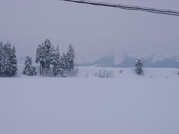 魚沼産コシヒカリの田んぼは雪が止んで静かな朝です