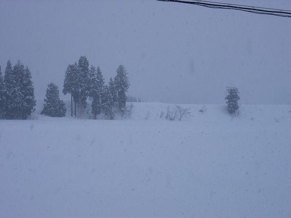 魚沼産コシヒカリの田んぼではまた雪が降り始めました