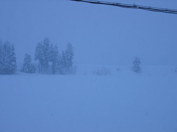 今日の魚沼産コシヒカリの田んぼは大雪です