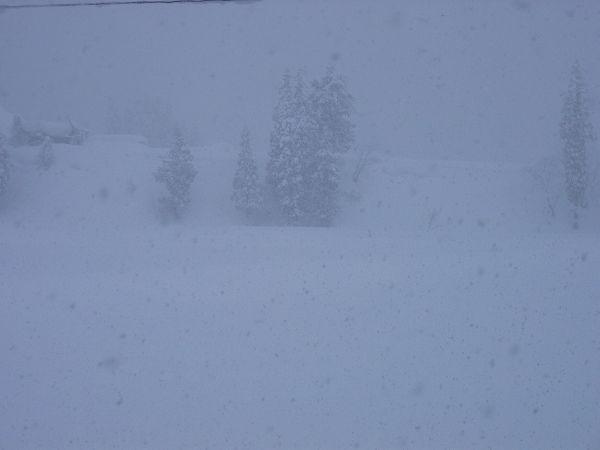 今朝も魚沼産コシヒカリの田んぼでは激しく雪が降り続いています