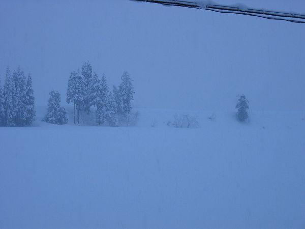 魚沼産コシヒカリの田んぼでは夕方になっても雪の勢いは止まりません