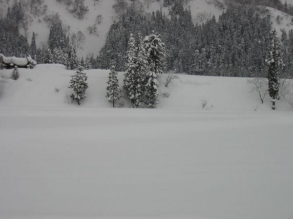 今日もまた魚沼産コシヒカリの田んぼではたくさん雪が降りました