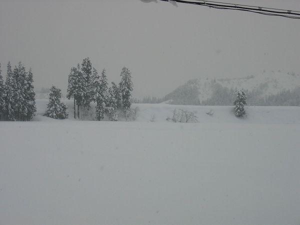 魚沼産コシヒカリの田んぼの雪はまだ降り止みません