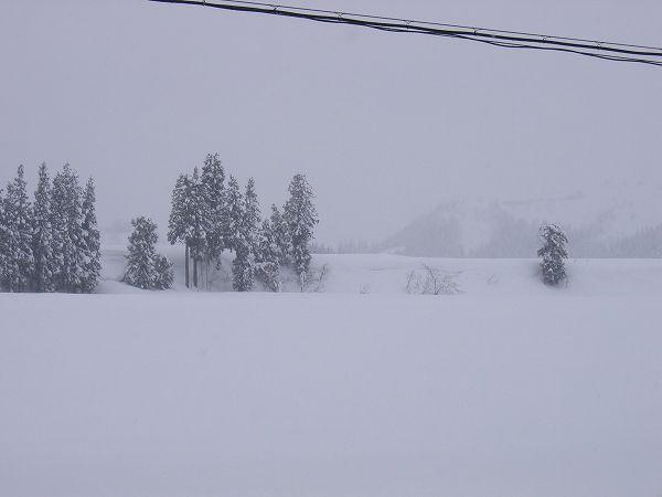 いまは魚沼産コシヒカリの田んぼの雪が止んでいます