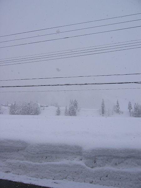 魚沼産コシヒカリの田んぼではほんとに雪がよく降ります