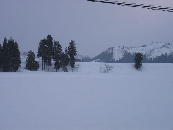 魚沼産コシヒカリの田んぼではちらほらと雪が舞っています