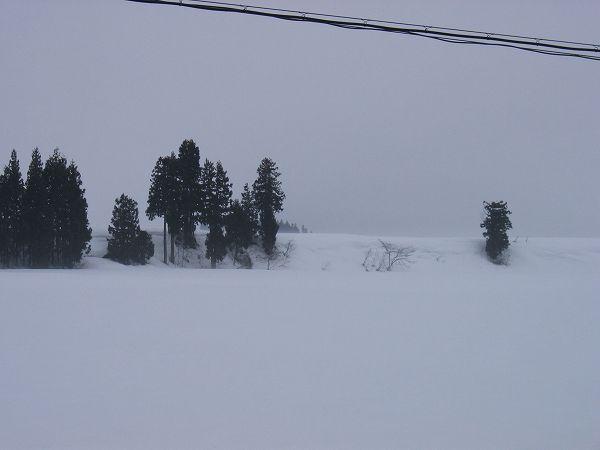 田んぼの霧が晴れてきました