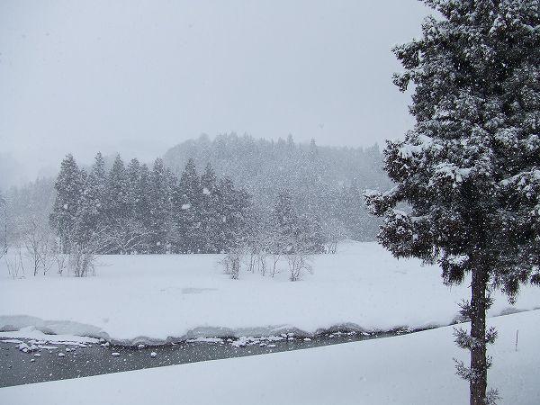 今朝の水無川の雪景色