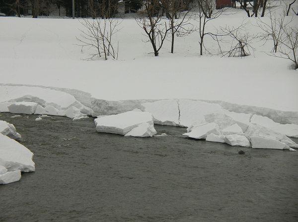 水無川を覆う雪が減って水面が出てきています
