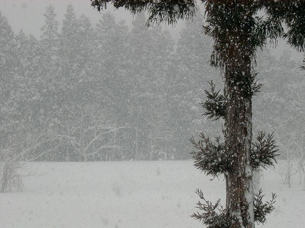 魚沼は今朝も雪で寒いです