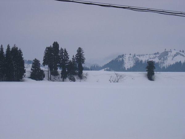 魚沼産コシヒカリの田んぼでは今朝もまた雪がちらついています