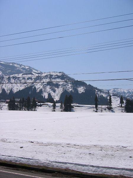 魚沼はすっかり春の陽気ですが、まだ田んぼにはたっぷりと雪が残っています