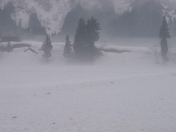 4月の雨に煙る魚沼産コシヒカリの田んぼ