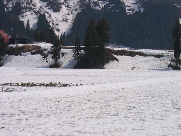 今日の魚沼はあたたかく、雪解けが進んでいます