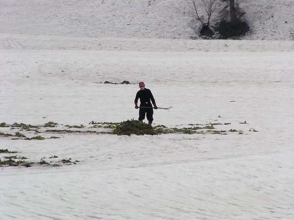 田んぼでは雪の上で農作業が始まりました