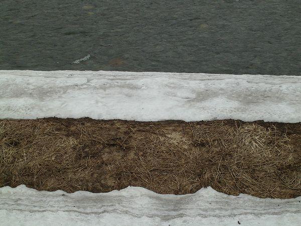 水無川の土手の雪が昨日よりまたぐんと少なくなっています