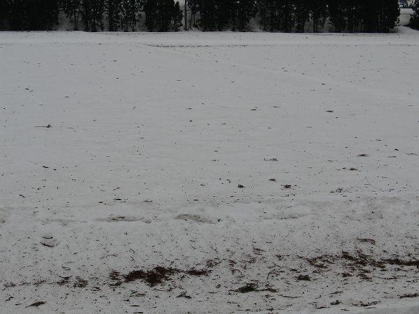 田んぼの雪面には風で飛んできた木の枝や葉っぱが散乱しています