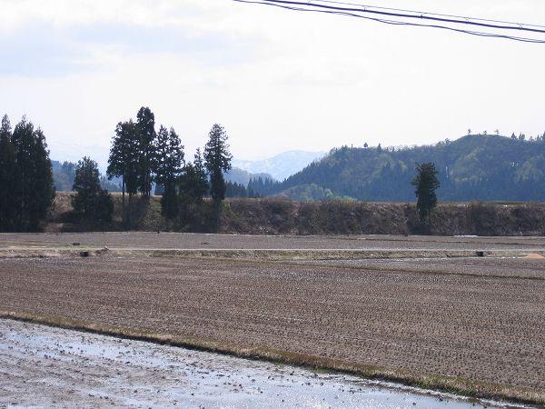 天気予報の通り、魚沼産コシヒカリの田んぼは夏を感じさせる暑さになりました