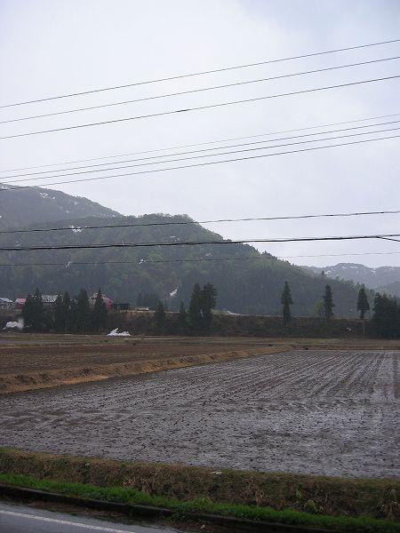 魚沼産コシヒカリの田んぼでは朝から雨が降り始めました