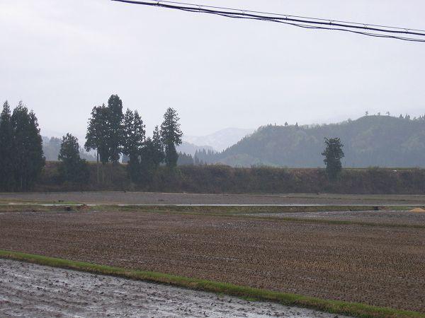 朝から雨が降り始めました