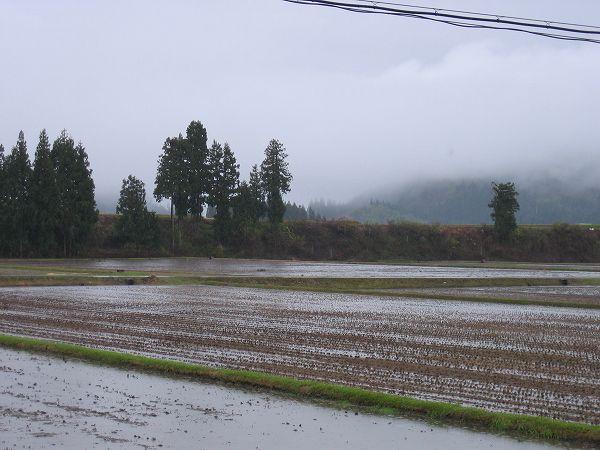 今日もまた新潟県南魚沼市は雨です