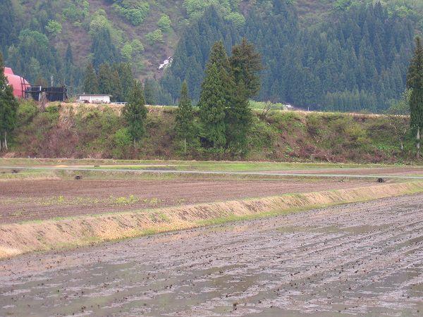 今日の魚沼は大荒れの天気でしたが、いまはもう雨が止みました