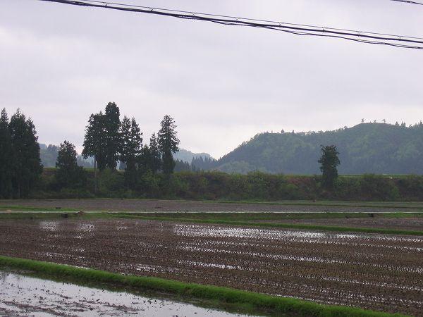 今日の魚沼は雨降りで肌寒く感じます