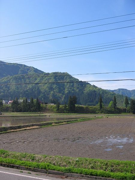 魚沼産コシヒカリの田んぼは青空が広がって爽やかな朝です
